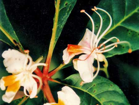 Gateway flower
