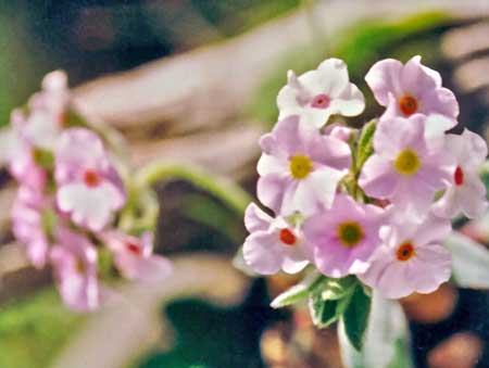 Childrens Flower
