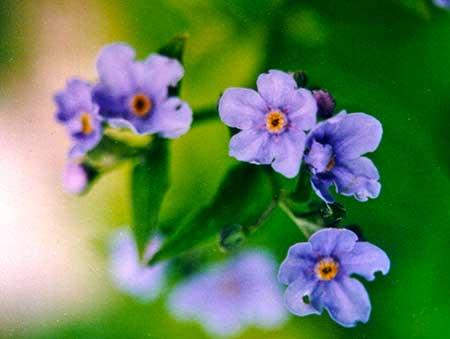 Let Go flower