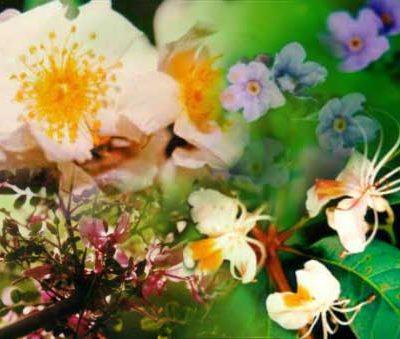 Vital Spark flower