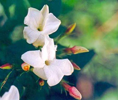 Gratefulness flower